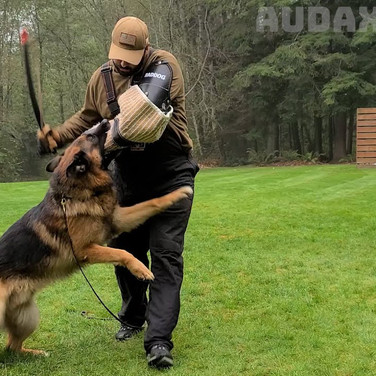 Biting Dogs
