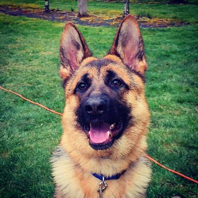 Jura: Happy Dog, Happy Life