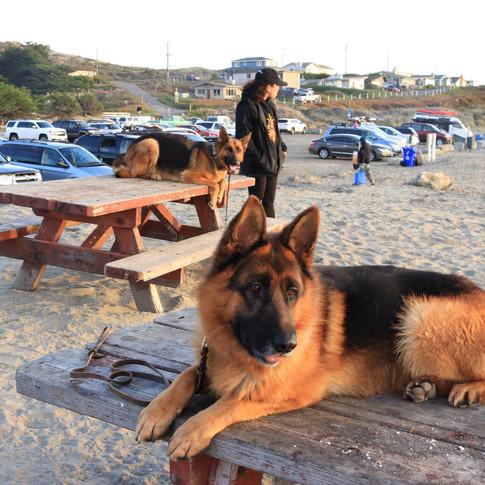 Zroc at the beach