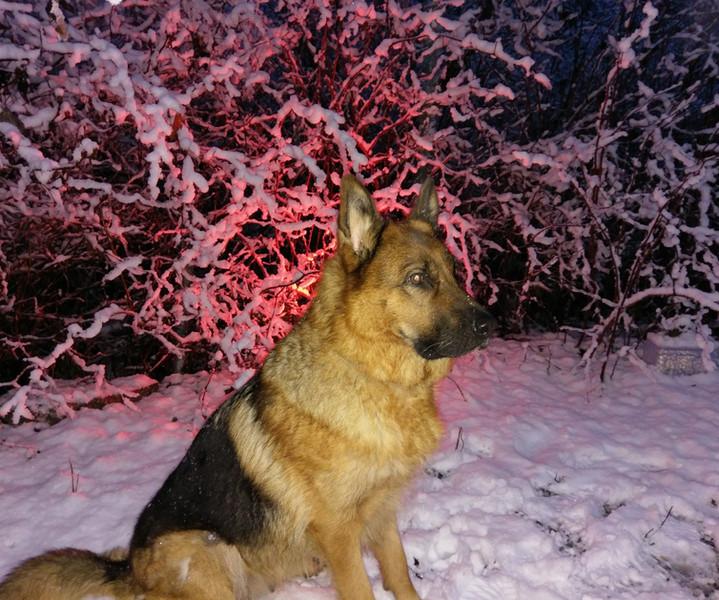 Chakira Snow.jpg