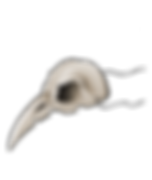 skull shard.png