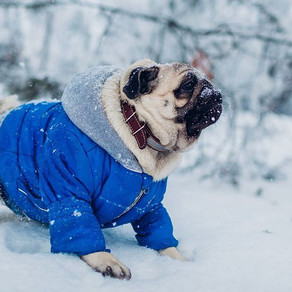 How to keep your dog warm in the snow