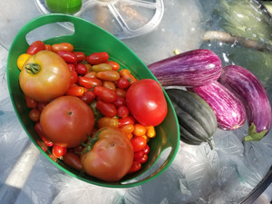 Tomatoes, Tomatoes, Tomatoes!