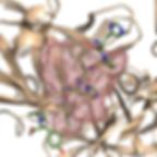 peptimap_logo.png