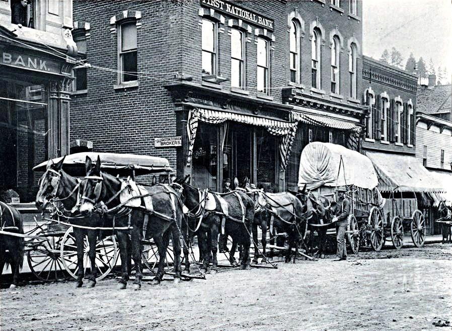 עגלות סוסים ברחובות ערים לפני 100 שנים. מאות אלפי סוסים סבלו ככלי הרכב העיקרי