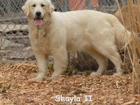 Shayla2.JPG