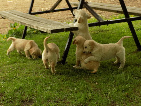Alli Litter ready to go to your homes.