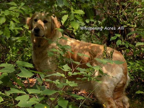Whispering Acres Alli.JPG