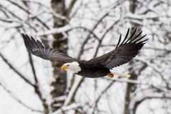 Eagle 22-0997