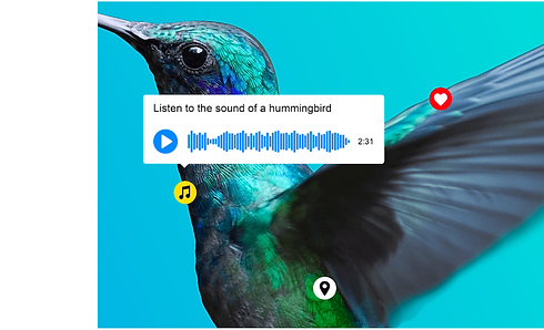 Thinglink-hummingbird3.png