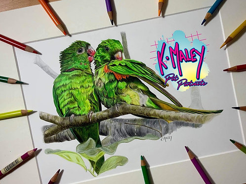 'Two's Company' Print Parakeets A4