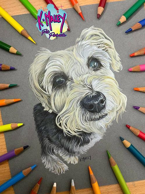 A5 Custom Pencil Pet Portrait