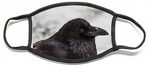 raven-david-kirby.jpg
