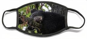 sleepy-cub-david-kirby.jpg