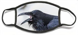 raven-1-david-kirby.jpg