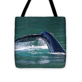 baby-whale-tail-16x16.jpg