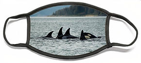 orcas-david-kirby.jpg