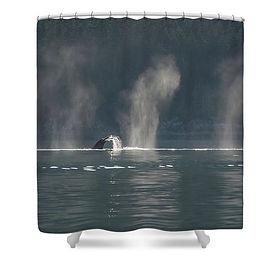 whale-tail-in-the-sun-david-kirby.jpg