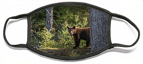 1-bear-david-kirby.jpg