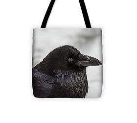 Raven 13x13.jpg
