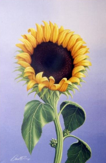 Luri's Sunflower