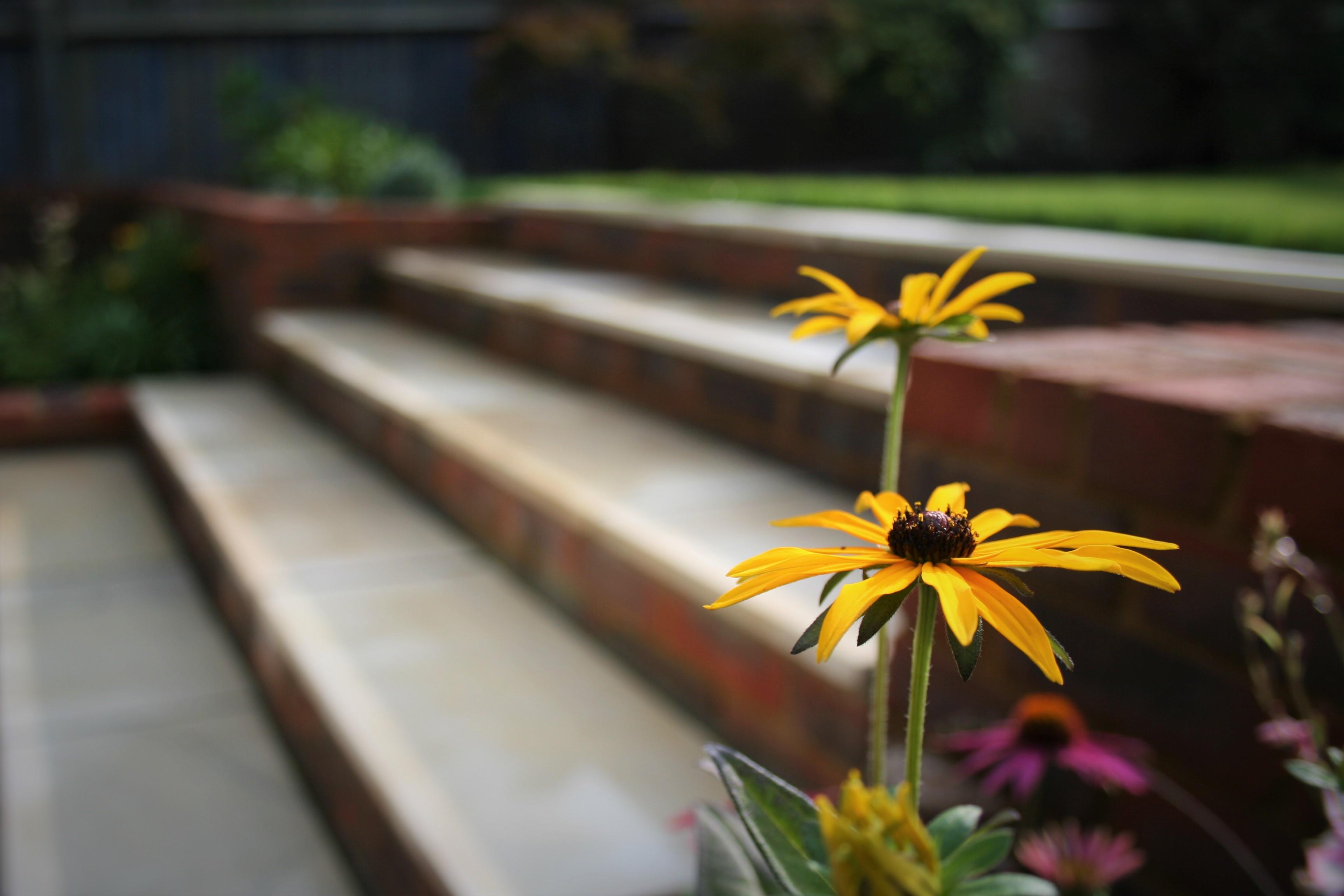 A Terraced Retreat