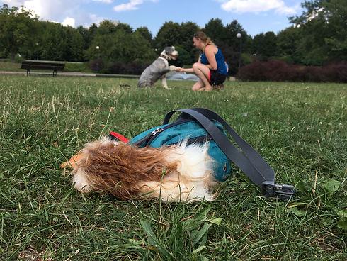 Grupowe szkolenia psów.JPG