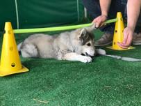 przedszkole dla psów.jpg