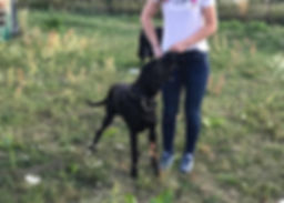 szkolenie psów Warszawa.jpg