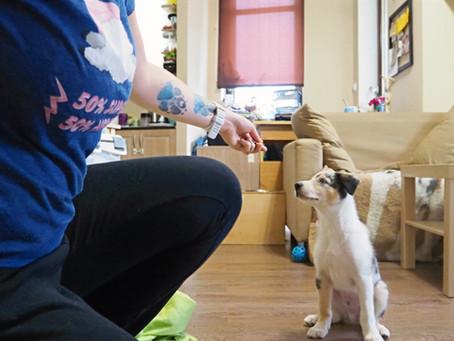 Szczenięca seria: część pierwsza - jak wybrać psa dla siebie?