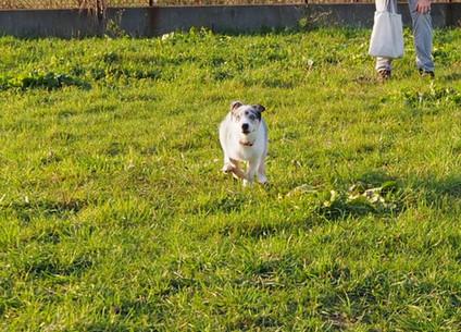 Ratunku! Mój pies ucieka na spacerze!