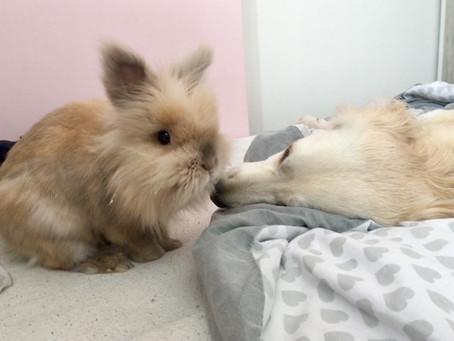 Jak pies z królikiem.