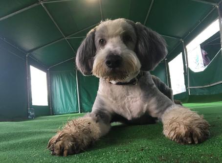 Niepewność siebie u psa - czyli o psich introwertykach
