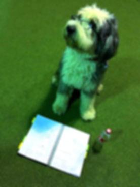 zaawansowane szkolenie psów Warszawa