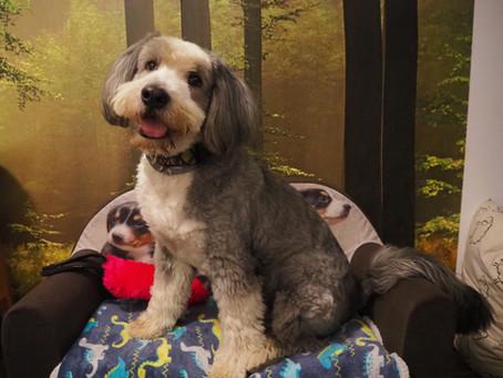 Jak przetrwać kwarantannę z psem i nie zwariować?