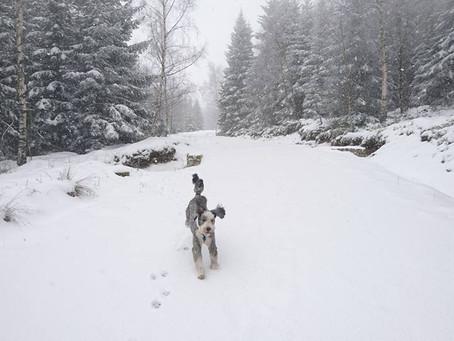 Hu hu ha! Idzie zima zła! I jak teraz zmęczyć psa?