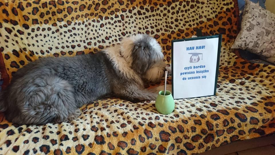 Szkolenie psów przy użyciu klikera opiera się o warunkowanie