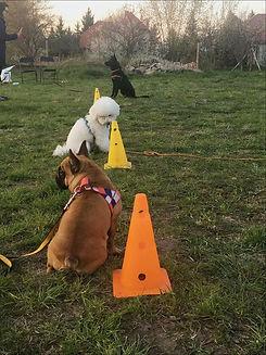 szkolenie psów.jpg