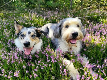 Aktywne karmienie psa - o co tyle szumu?