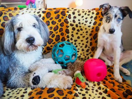 Zabawki dla psa okiem psiego psychologa - część I