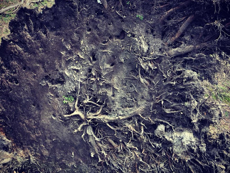 Planting New Roots