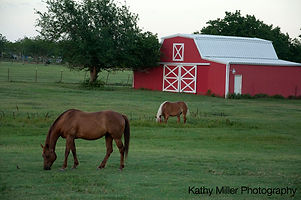 horse and red barn sized.jpg