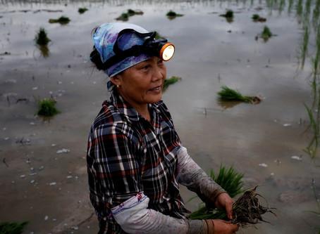 Expertos en migraciones y cambio climático piden políticas más efectivas para evitar recesión.