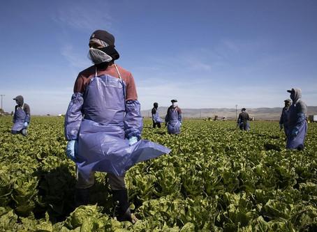 Hacinados, maltratados y hambrientos: la vida de los trabajadores agrícolas inmigrantes.