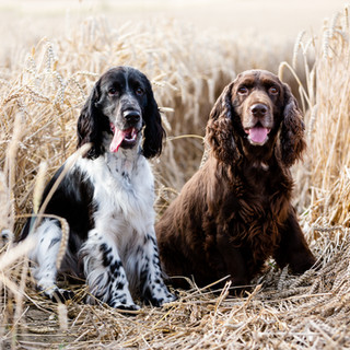 FB DOGS-1.jpg