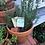 Thumbnail: Rosemary and Tea Tree Soap