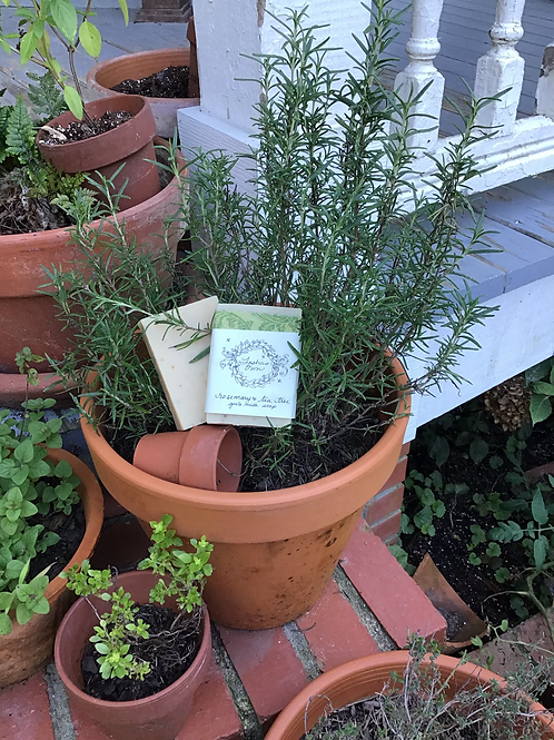 Rosemary and Tea Tree Soap