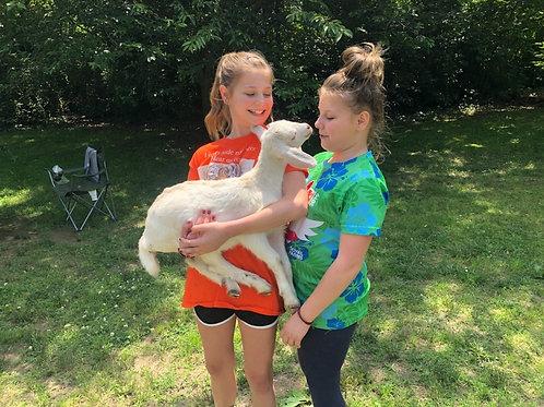Farm Camp July 12-16