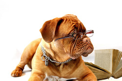 puppy-dog-reading-female-office-mammal-734854-pxhere.com
