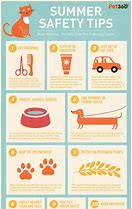 Furry Friends Summer Safety